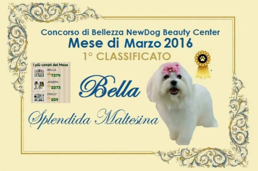 BELLA Vincitrice Concorso di Bellezza NewDog Marzo 2016