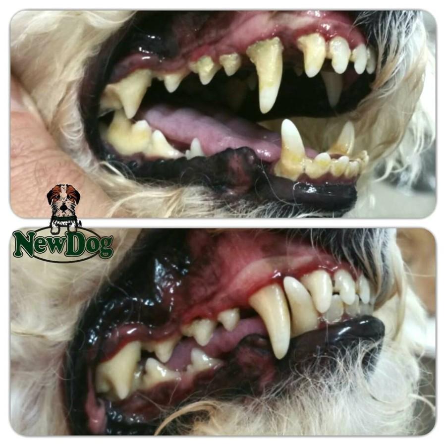 Pulizia dei Denti Fendi