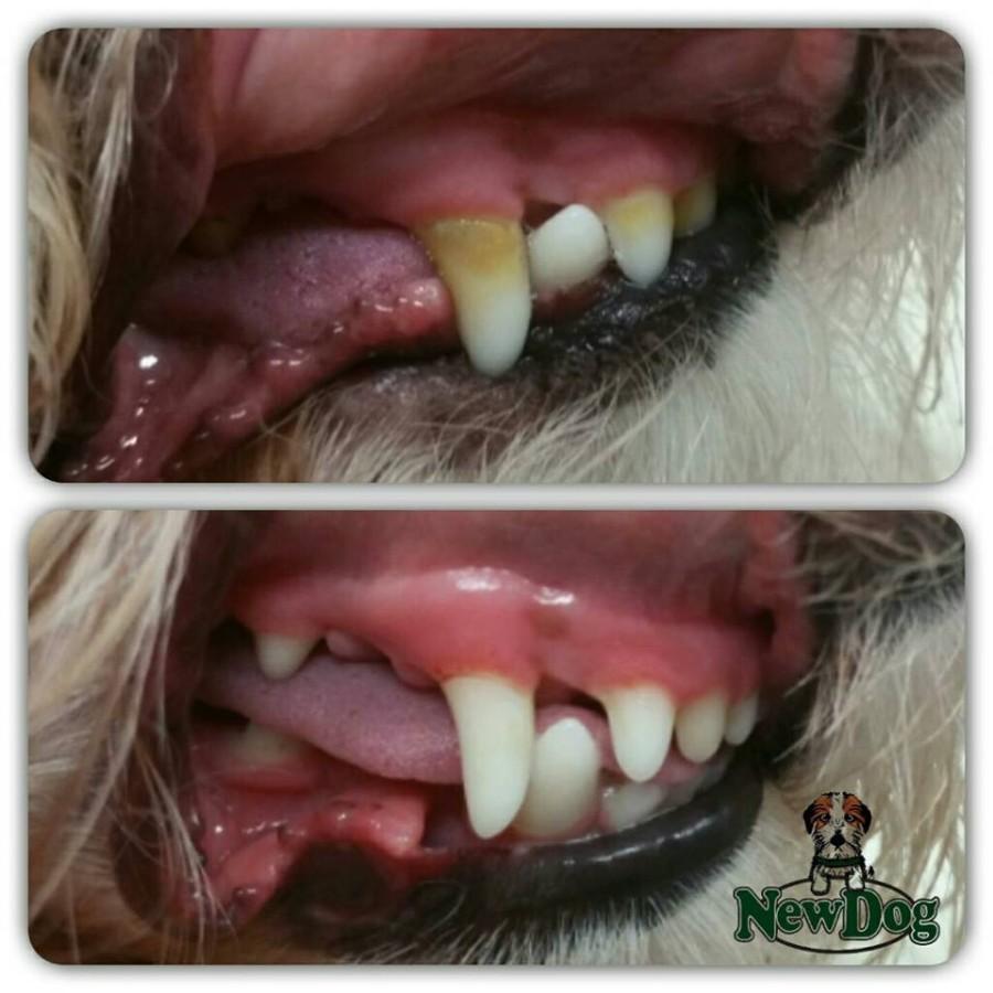 Pulizia dei denti Oscar