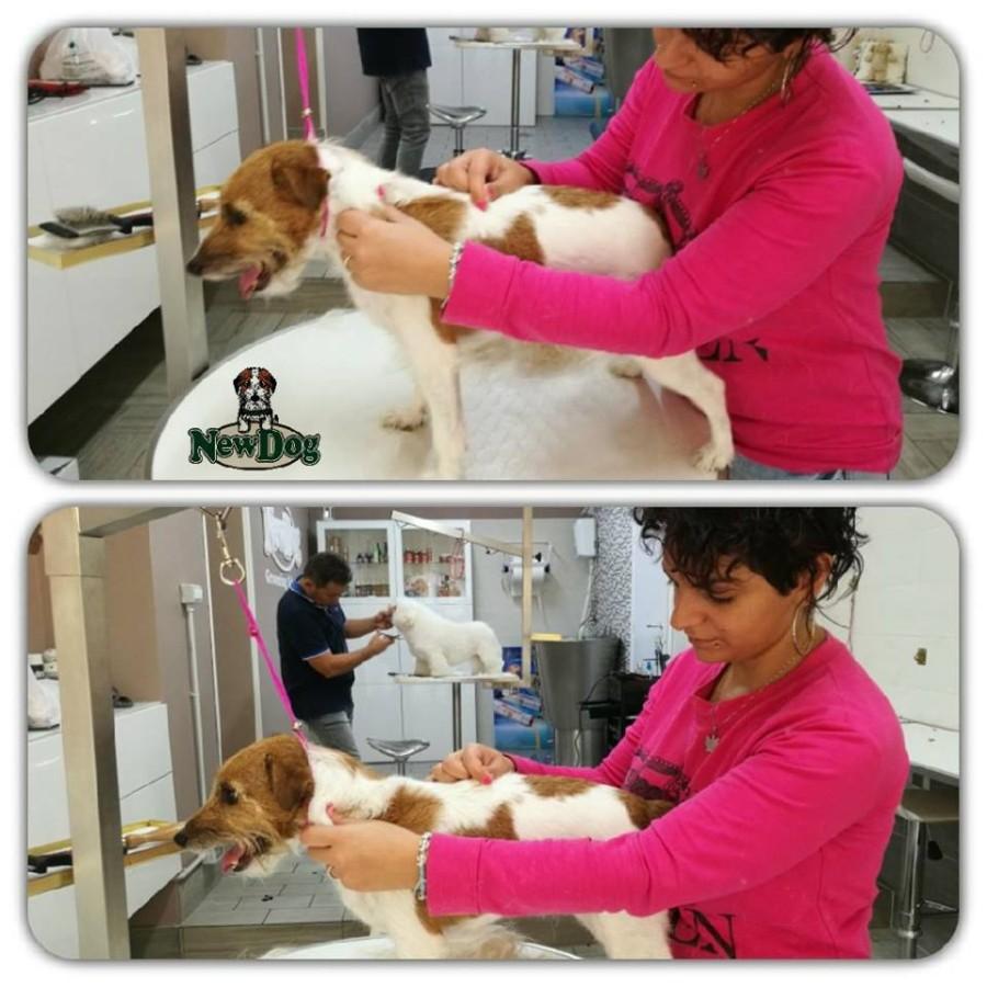 Charlotte Dog Grooming School