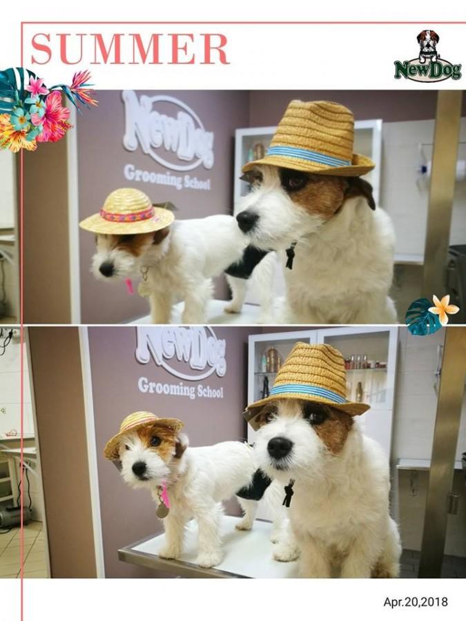 Cappellini di Paglia per Cani