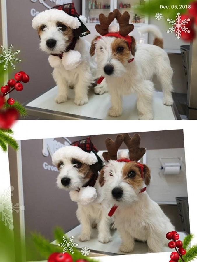 Corna di Renna e Cappellino di Babbo Natale con Sciarpa