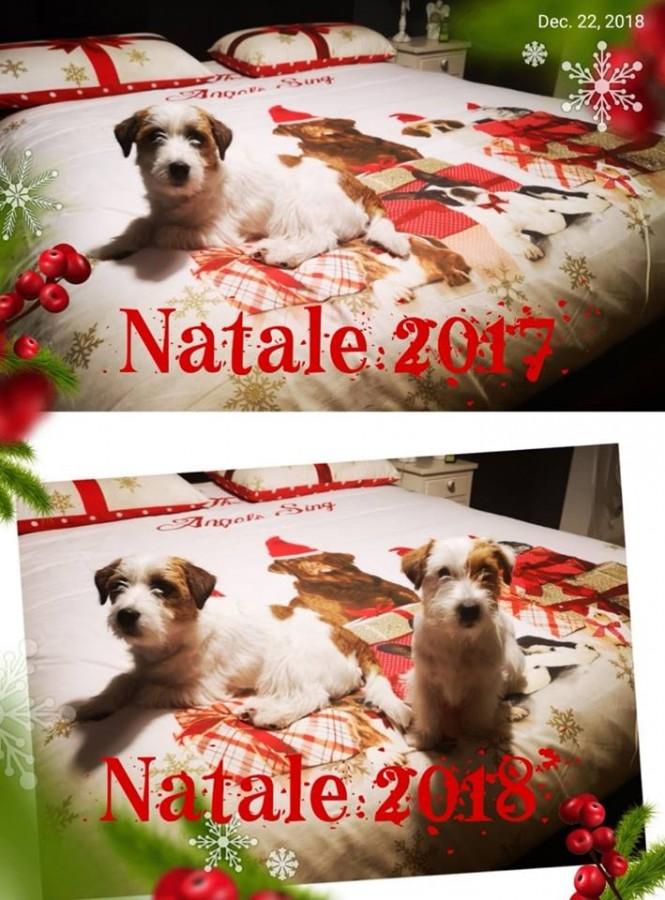 🎄 Natale 2018 🎄 la Nostra famiglia è cresciuta… ❤️❤️❤️