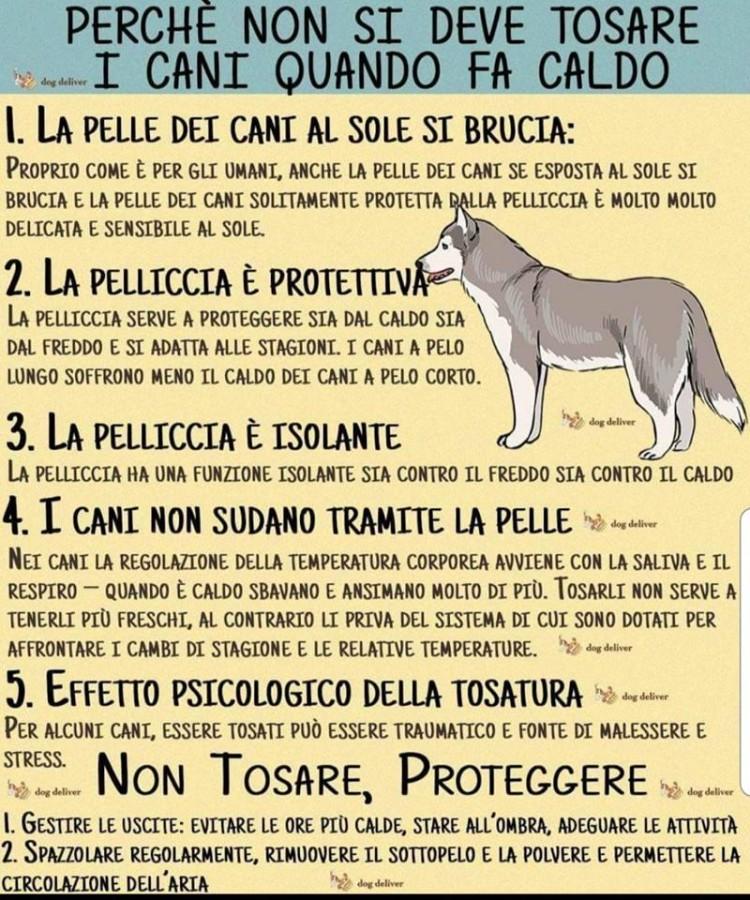 Perchè non Tosare i Cani