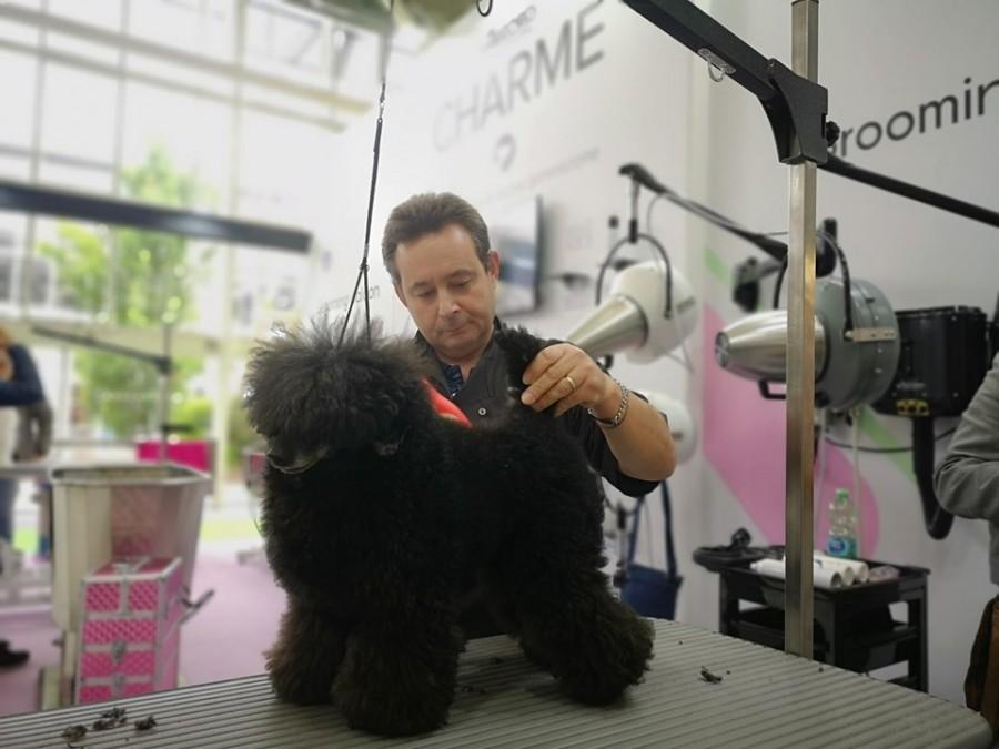 asian style terrier clip barbone nano prima